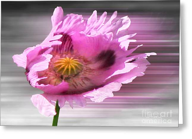 The Nature Center Greeting Cards - Poppy in the Wind Greeting Card by Jennie Breeze