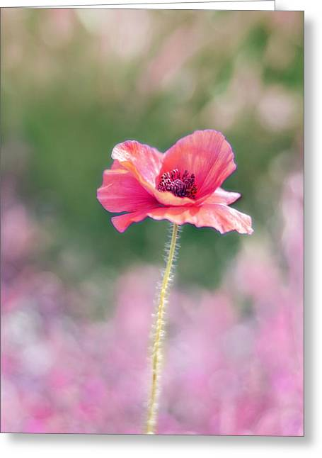 Large Flowers Greeting Cards - Poppy Love Greeting Card by Amy Tyler
