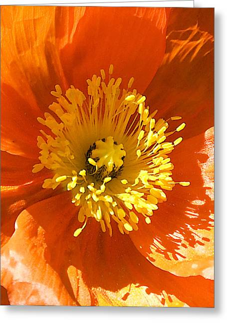 Op Art Photographs Greeting Cards - Poppy OpArt Triplet C Greeting Card by Dick Jones