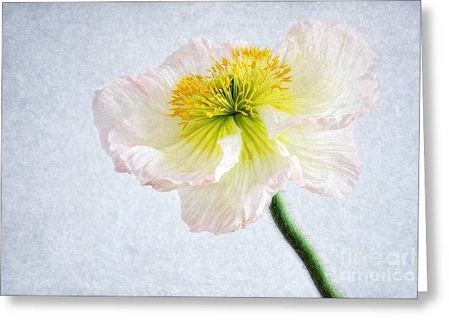 Flower Design Greeting Cards - Poppy portrait Greeting Card by SK Pfphotography