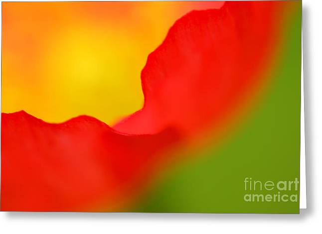 Blooming Greeting Cards - Poppy Greeting Card by Silke Magino