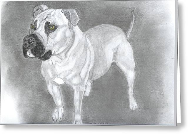 Doggies Greeting Cards - Pops Greeting Card by Don  Gallacher