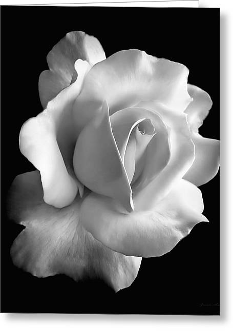 White Florals Greeting Cards - Porcelain Rose Flower Black and White Greeting Card by Jennie Marie Schell