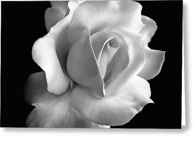 Porcelain Rose Flower Black and White Greeting Card by Jennie Marie Schell