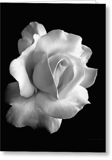 Rose Garden Greeting Cards - Porcelain Rose Flower Black and White Greeting Card by Jennie Marie Schell