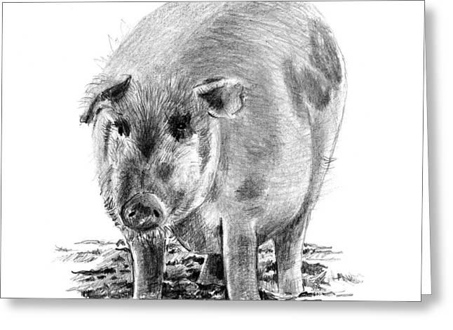 Pig Drawings Greeting Cards - Porker Pig - Pride Of The Barnyard Greeting Card by Arline Wagner