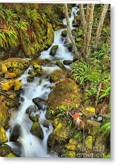 Port Alice Rainforest Falls Greeting Card by Adam Jewell