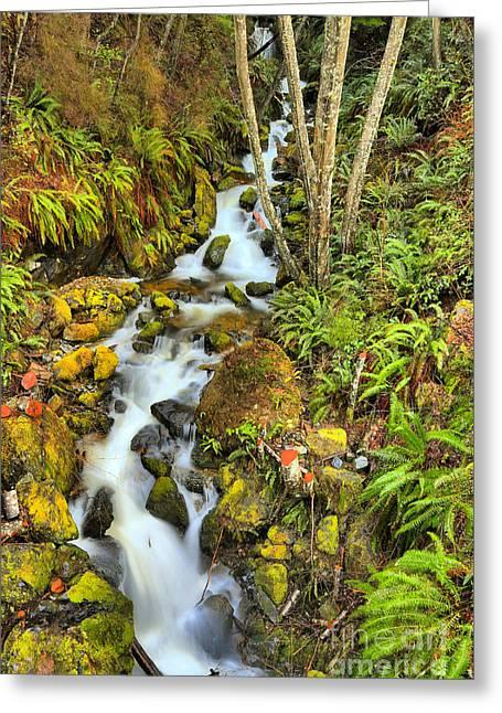 Port Alice Wilderness Waterfall Greeting Card by Adam Jewell