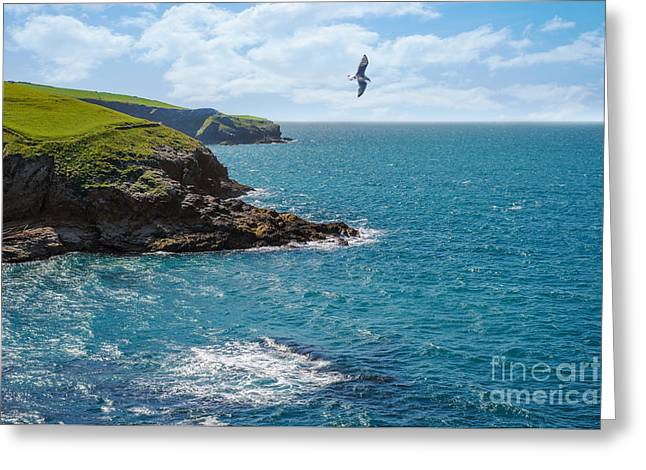 Seagull Flying Greeting Cards - Port Isaac Coastline Greeting Card by Amanda And Christopher Elwell