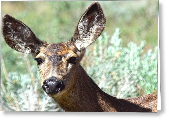 Portrait With Mountain Greeting Cards - Portrait Of A Doe Greeting Card by Frank Wilson