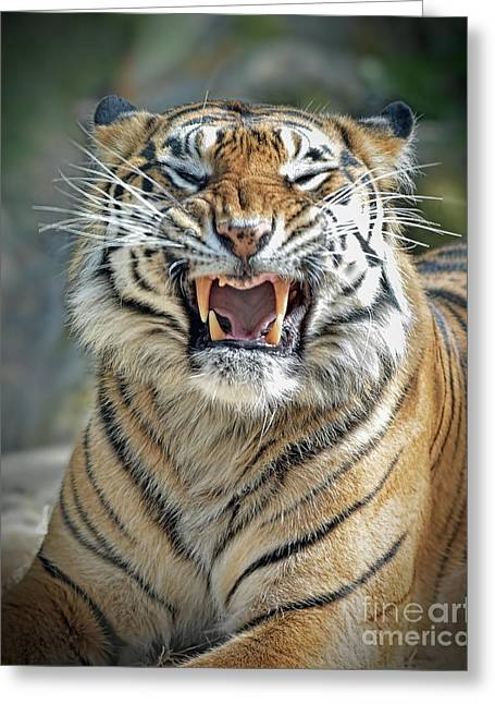 Growling Greeting Cards - Portrait of a Growling Tiger  Greeting Card by Jim Fitzpatrick