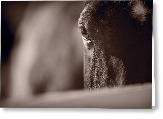 Kentucky Horse Park Photographs Greeting Cards - Portrait of a Horse Kentucky Greeting Card by Steve Gadomski