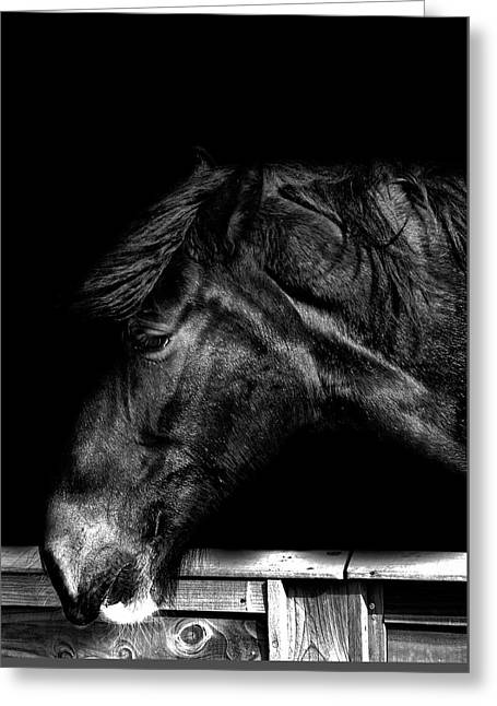Portrait Of A Horse Greeting Card by Martin Newman