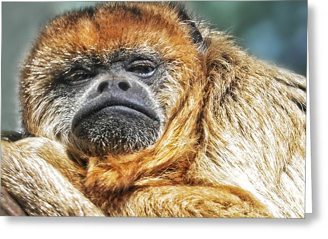Year Of The Monkey Greeting Cards - Portrait of a Howler Monkey Greeting Card by Jim Fitzpatrick