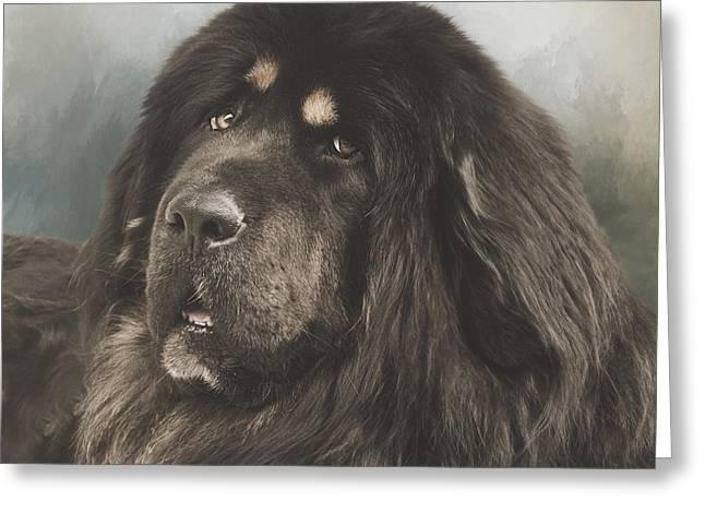Tibetan Portrait Greeting Cards - Portrait of a Tibetan Mastiff Greeting Card by Wolf Shadow  Photography