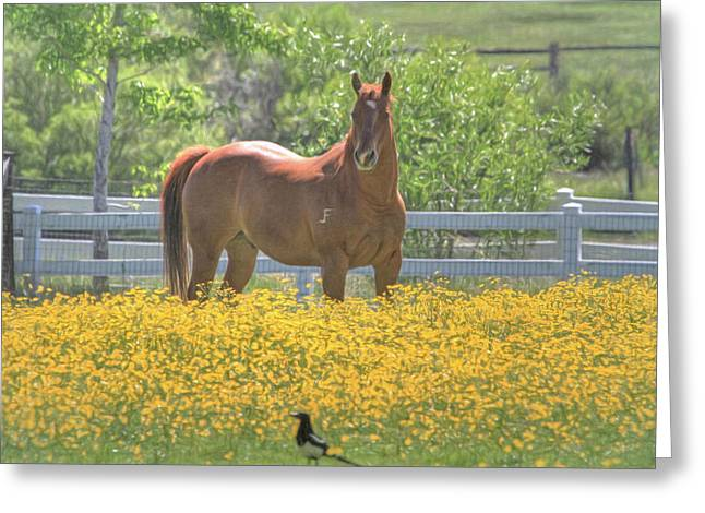 Quarter Horses Greeting Cards - Portrait of a Quarter Horse Greeting Card by Donna Kennedy