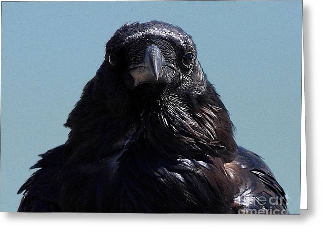 Wing Tong Photographs Greeting Cards - Portrait of a Raven Greeting Card by Wingsdomain Art and Photography