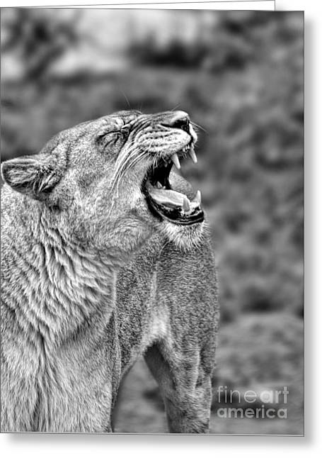 Reflection In Water Greeting Cards - Portrait of a Roaring Lioness II Greeting Card by Jim Fitzpatrick