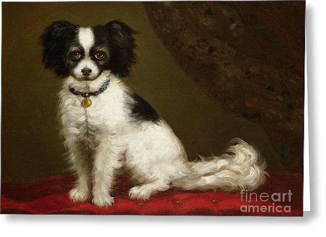 Pet Greeting Cards - Portrait of a Spaniel Greeting Card by Anonymous