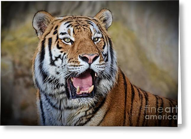 Gray Hair Greeting Cards - Portrait of a Tiger II Greeting Card by Jim Fitzpatrick