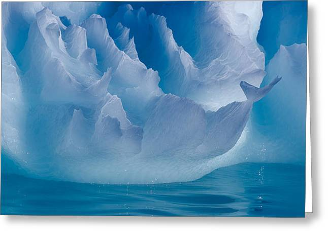 Iceberg Greeting Cards - Portrait Of An Iceberg Greeting Card by Leah Kennedy