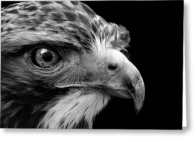 Portrait Of Common Buzzard In Black And White Greeting Card by Lukas Holas