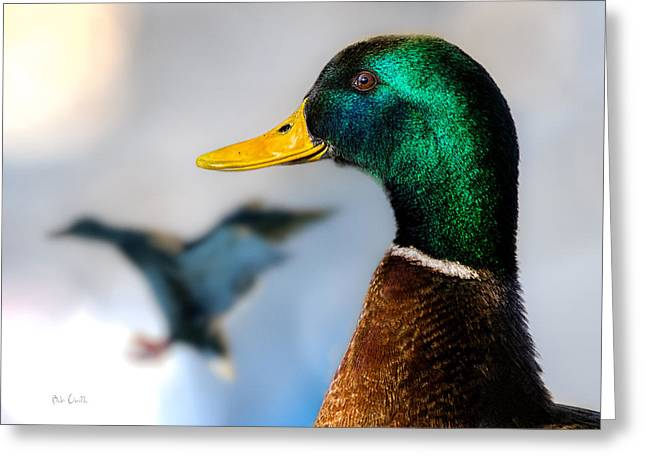 Mallards Greeting Cards - Portrait of Duck 2 Greeting Card by Bob Orsillo