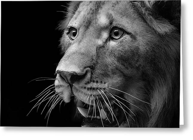 Lions Photographs Greeting Cards - Portrait of Lion in black and white II Greeting Card by Lukas Holas