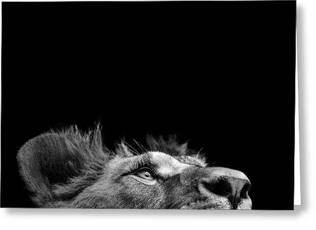 Lions Photographs Greeting Cards - Portrait of Lion in black and white III Greeting Card by Lukas Holas