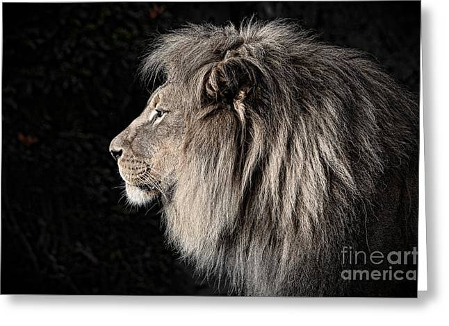 Lions Greeting Cards - Portrait of the King of the Jungle II Greeting Card by Jim Fitzpatrick