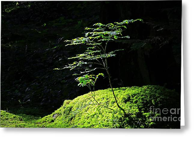 Portrait Of Two Tree Seedlings Greeting Card by Charline Xia