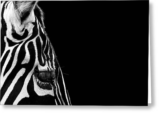 Zebras Greeting Cards - Portrait of Zebra in black and white IV Greeting Card by Lukas Holas