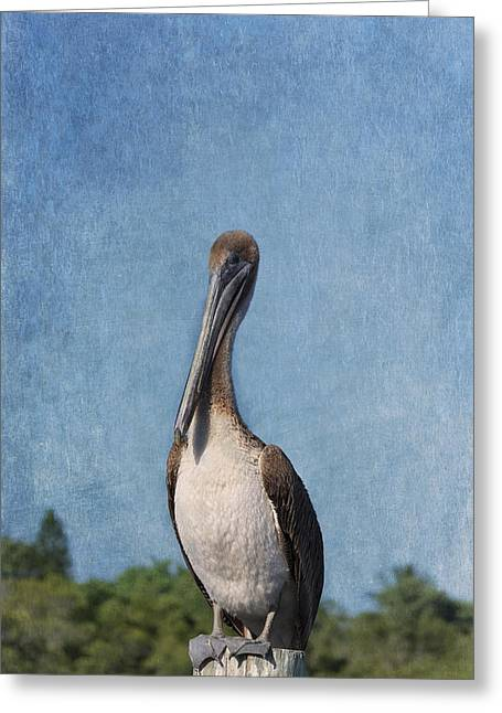 Posing Pelican Greeting Card by Kim Hojnacki