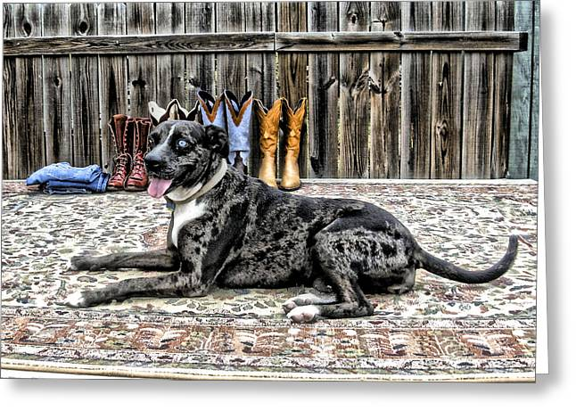 Catahoula Greeting Cards - Posing pretty Greeting Card by K Marie