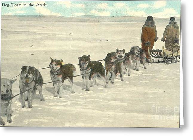 Postal Paintings Greeting Cards - Postal Mail prize dog team in the Arctic 1911 Greeting Card by Celestial Images