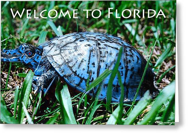 Florida Gators Greeting Cards - Postcard 2 Greeting Card by Evelyn Patrick