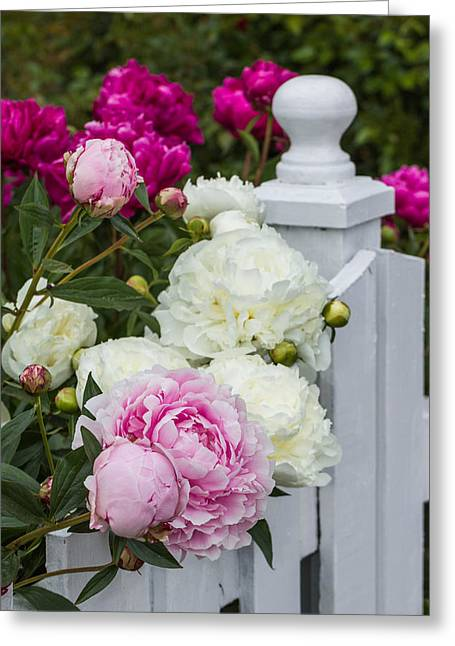 Jacksonville Greeting Cards - Posted Peonies Greeting Card by Karen Forsyth