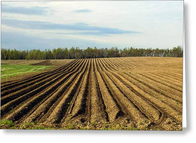 Maine Farms Greeting Cards - Potatoes Sowed and Rowed Greeting Card by William Tasker
