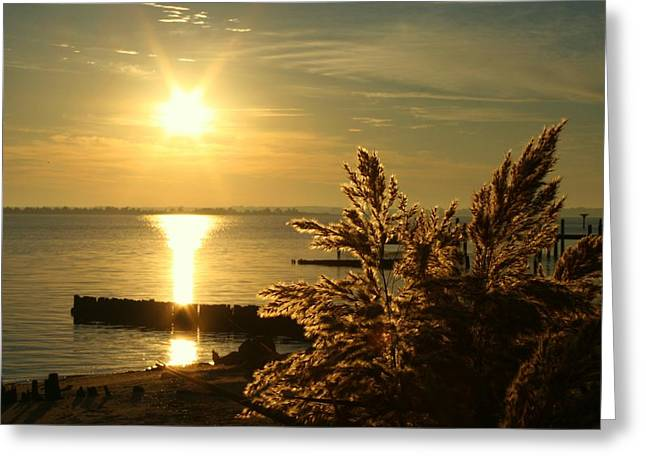 Virginia Pyrography Greeting Cards - Potomac River Sunrise Greeting Card by Pathways Life  Coaching