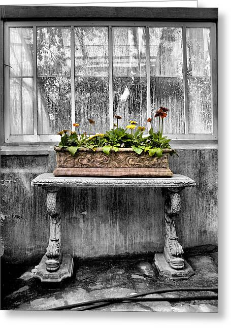 Potting Bench Greeting Cards - Potted Greeting Card by Russell Styles