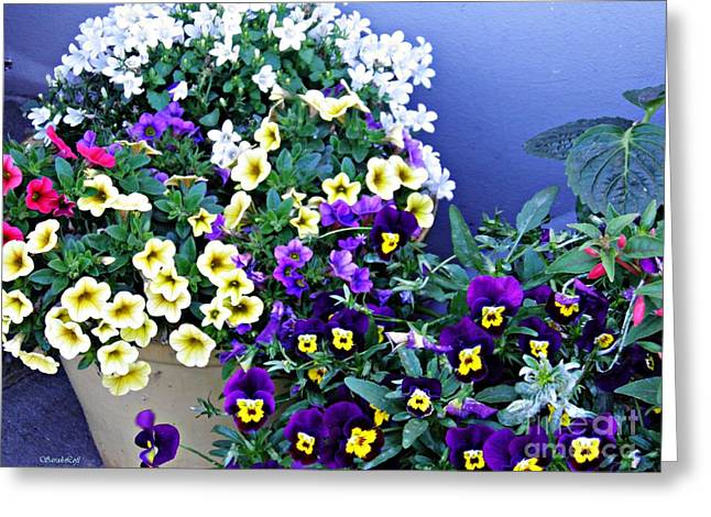Sarah Loft Greeting Cards - Potted Spring Flowers Greeting Card by Sarah Loft