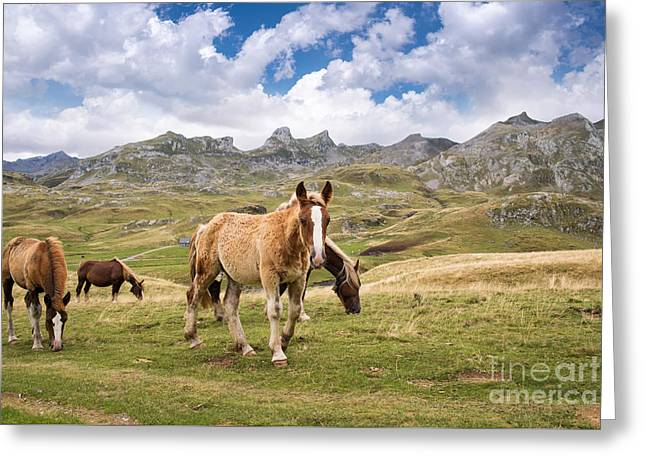 Mountain Valley Greeting Cards - Pourtalet pass Greeting Card by Delphimages Photo Creations