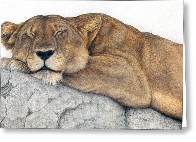Cat Drawings Greeting Cards - Power and Grace at Rest Greeting Card by Pat Erickson