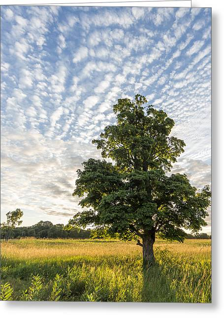 Sunrise Greeting Cards - Power of a Tree Greeting Card by Everet Regal