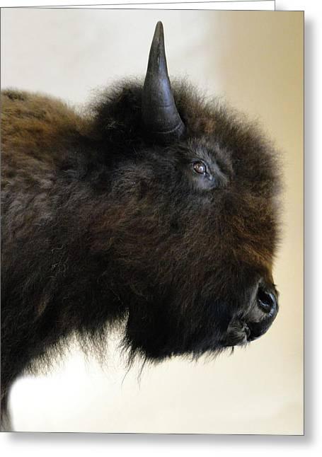 Buffalo Greeting Cards - Prairie Bison Greeting Card by Al Bourassa