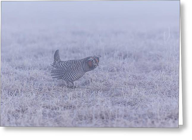 Prairie Chickens Greeting Cards - Prairie Chicken 2-2015 Greeting Card by Thomas Young