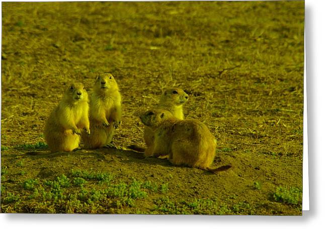 Prairie Dogs Greeting Cards - Prairie Dog social gathering Greeting Card by Jeff  Swan