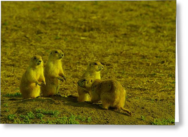 Prairie Dogs Greeting Cards - Prairie dogs hanging out  Greeting Card by Jeff  Swan
