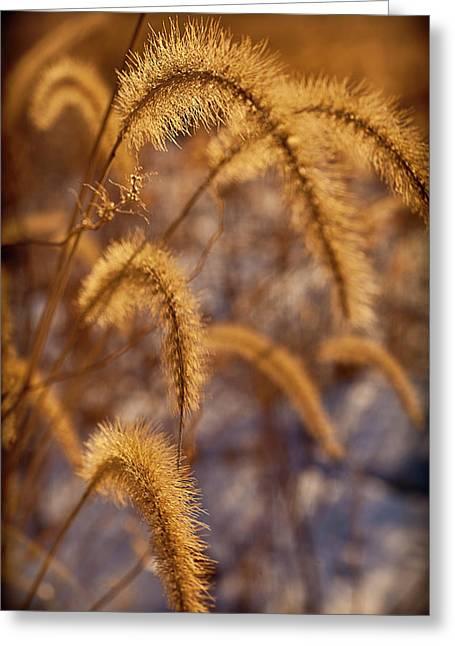 Prairies Greeting Cards - Prairie Grass Detail Greeting Card by Steve Gadomski