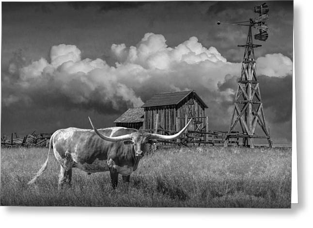 Randy Greeting Cards - Prairie pasture with a Longhorn Steer Greeting Card by Randall Nyhof